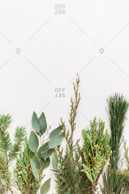 Greenery with negative space on a white background