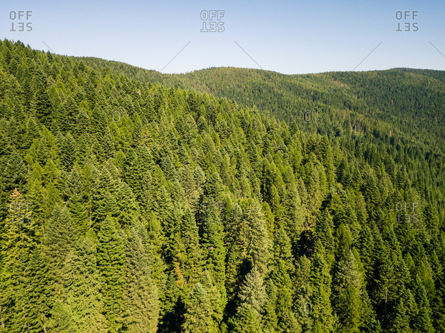 Pine forest aerial image - from the Offset Collection
