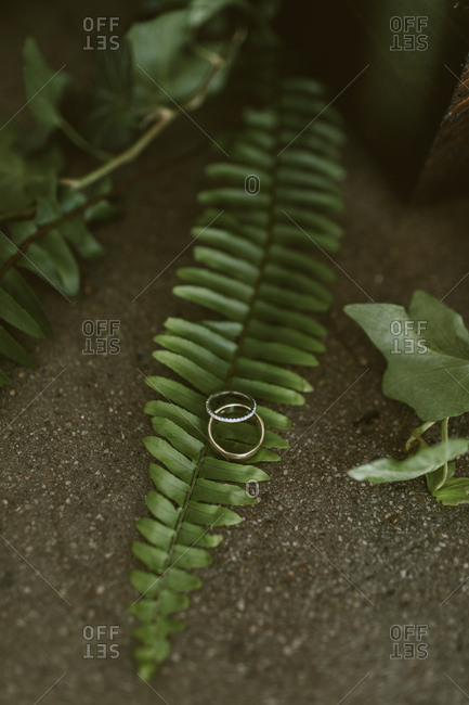 Wedding rings sitting on green ferns