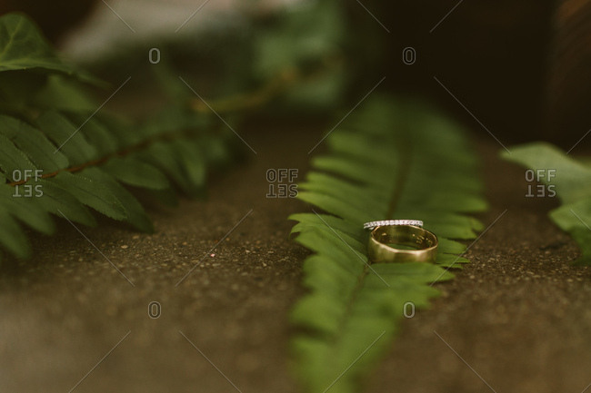 Wedding rings on green ferns
