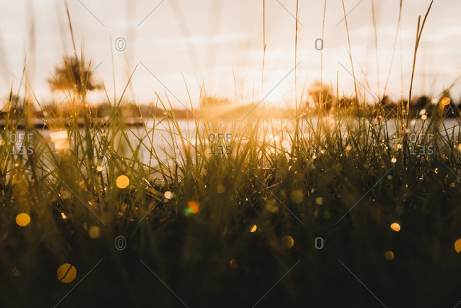 View of lake and sunset through tall grass