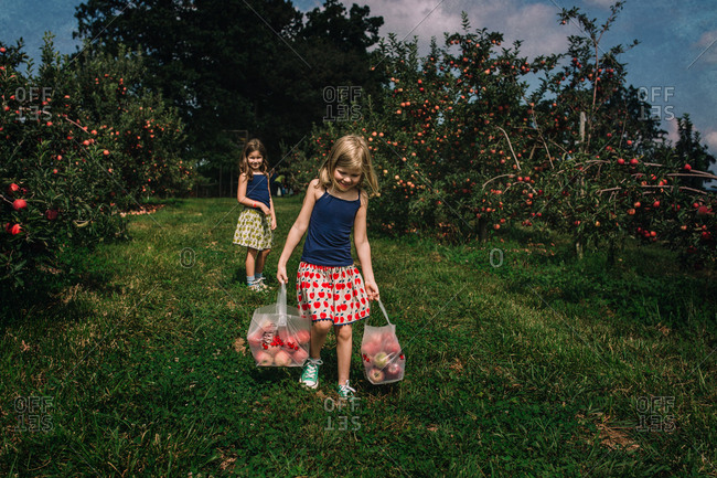 Little girl carrying apples in an orchard while another girl watches