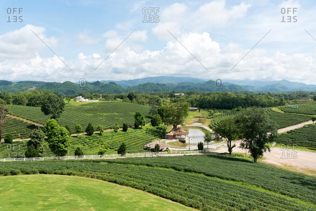 June 3, 2018: Picturesque landscape of green plantations of Choui Fong tea farm under cloudy sky, Thailand