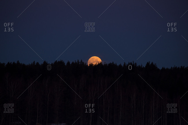 Full moon glowing behind a forest
