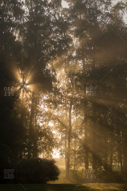 Sun rays shining between trees in foggy autumn morning