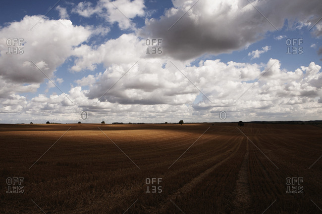 Idyllic clouds over rural agricultural crop, Wiendorf, Mecklenburg-Vorpommern, Germany