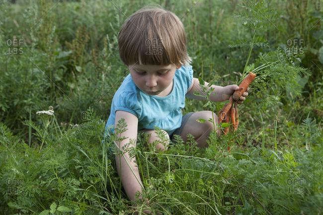 Girl harvesting carrots in vegetable garden
