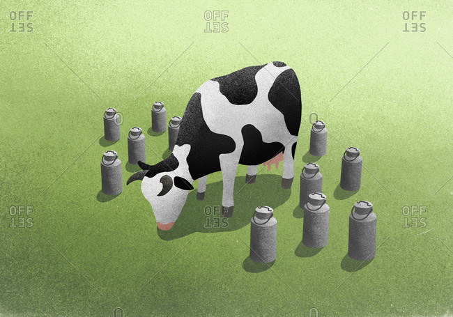 Milk canisters surrounding cow grazing in field
