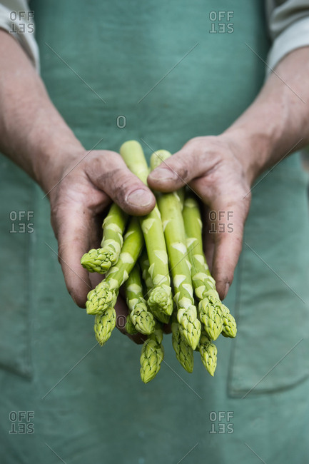 Man holding bundle of green organic asparagus in hands