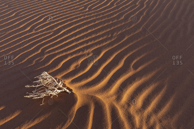 Africa- Namibia- Namib desert- Naukluft National Park- dead bush on sand dune