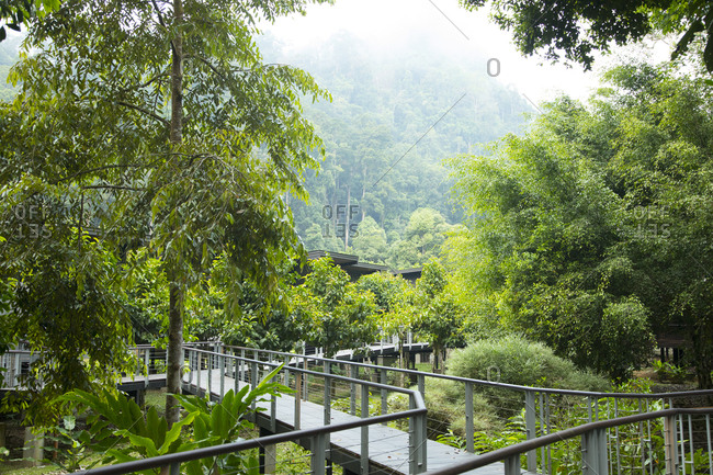 Walkway Allows Visitors to Explore the Wetlands of Borneo