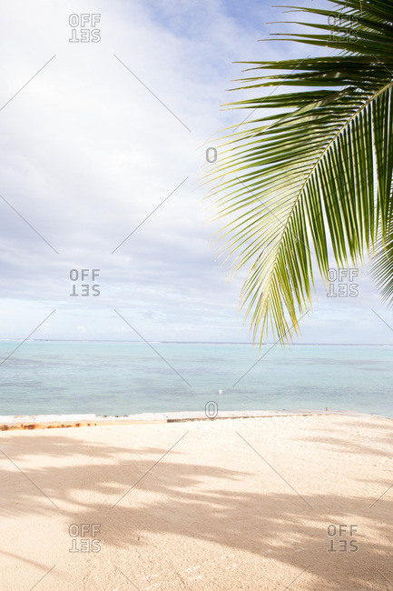 Palm frond and tropical sandy beach in Tahiti