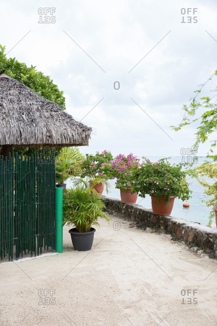 Potted plants arranged outside of building with thatched roof on the coast of Tahiti