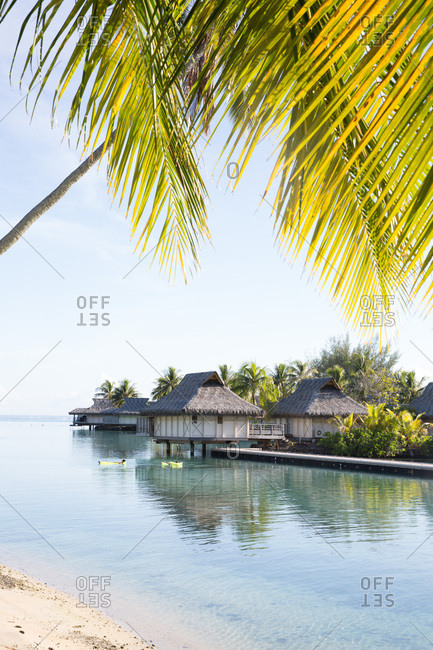 View of overwater bungalows from sandy beach with palm tree on tropical island