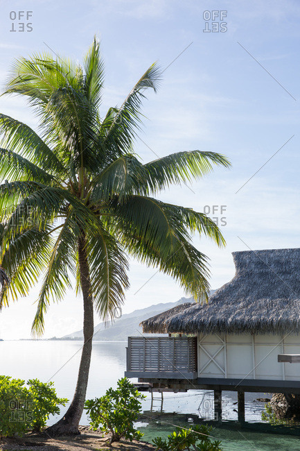 Palm tree and overwater bungalow on tropical island beach