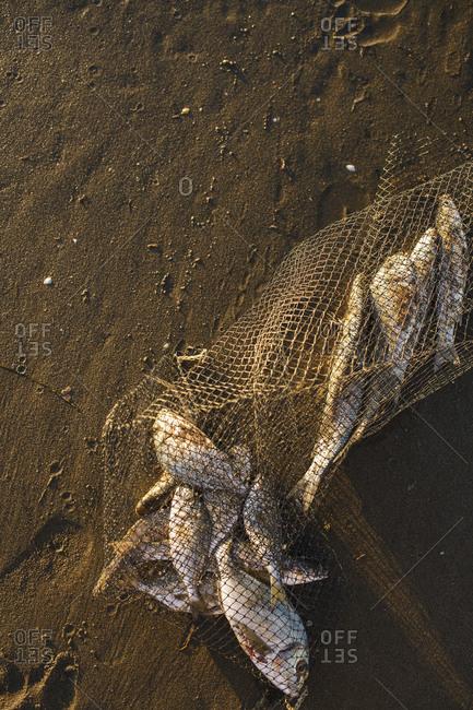Net full of fish