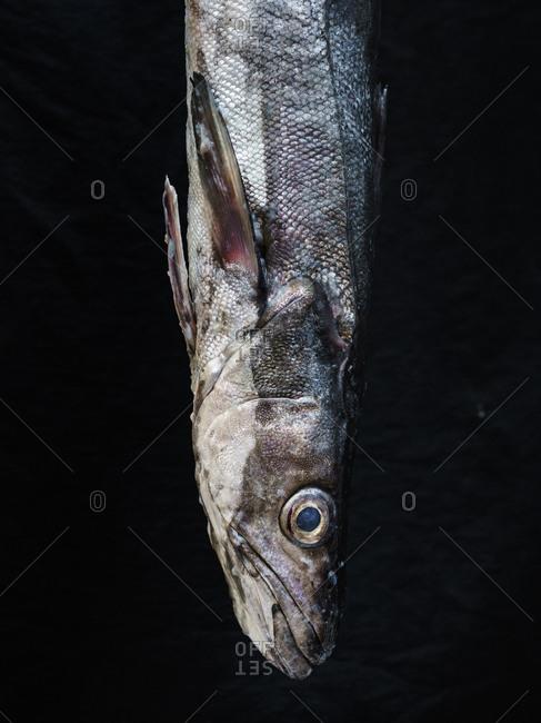 Close up of fish on dark background