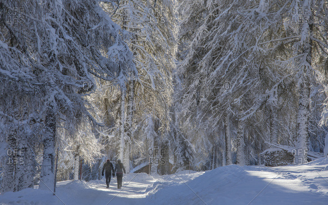 Trekkers in Campo di Dentro valley after an intensive snowfall, Sesto, Pusteria valley, Trentino Alto Adige, Italy, Europe