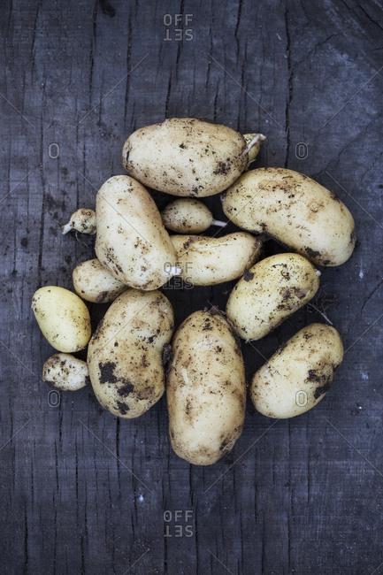 Close up of freshly harvested potatoes on dark blue background.
