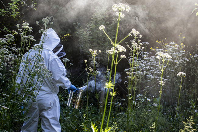 Beekeeper wearing protective suit at work, using smoker to calm bees.