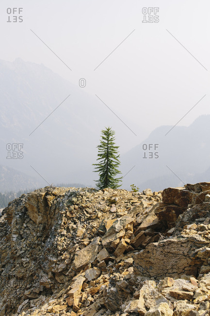 A single pine tree on a mountain top on the Pacific Crest Trail, near Cutthroat Pass, North Cascades, Washington