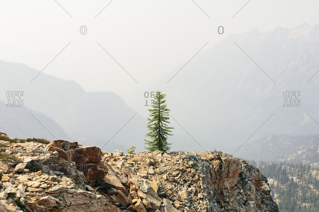 A pine tree on a rock on the Pacific Crest Trail, near Cutthroat Pass, North Cascades, Washington