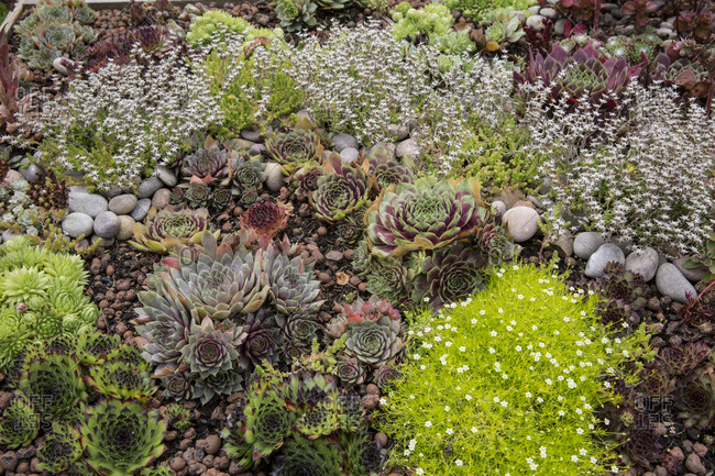 High angle view of flower bed with selection of succulent plants in a garden.