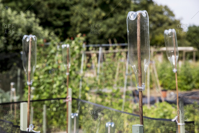 Close up of empty plastic bottles on wooden canes in an allotment.