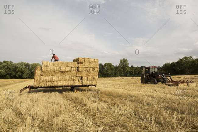 Farmer baling straw, standing on trailer on top of stack of straw bales.