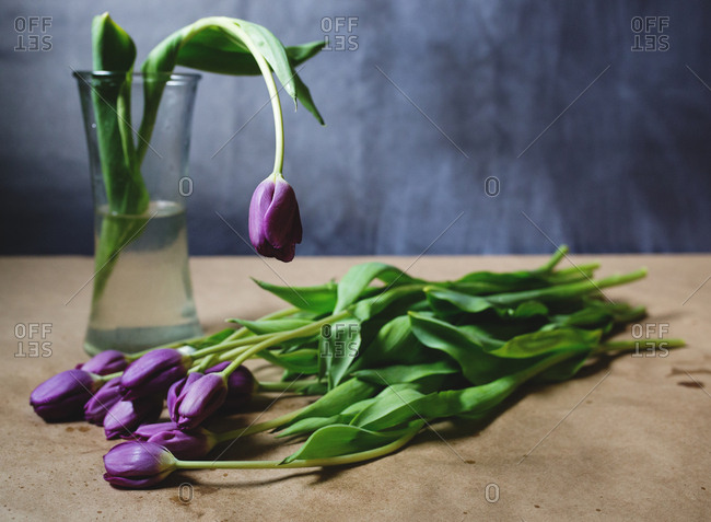 Arrangement of purple tulips, one in a vase and many on the table