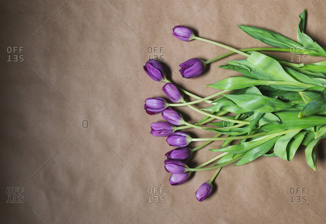 Arrangement of tulips on brown paper