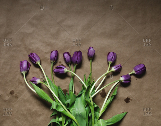 Bouquet of purple tulips on brown paper