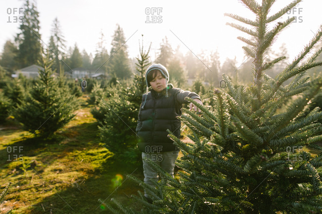 Boy touching branches of tree at Christmas tree farm