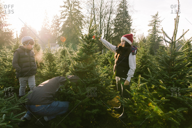 Father and children cutting down tree together at Christmas tree farm