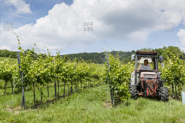 June 3, 2018: Vineyards in the 19th district, Vienna, Austria.
