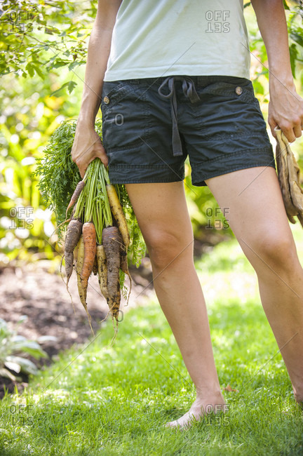 Low section of female gardener standing barefoot on grass with bunch of freshly dug carrots in hand, Chester,?Nova Scotia,?Canada
