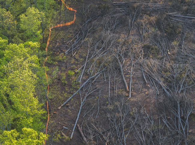 Aerial view of fallen trees after land clearing, Snellville, Georgia, USA