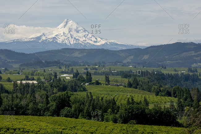 Green landscape with snowcapped mount Hood volcano in background, Hood River, Oregon, USA