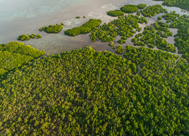 Aerial abstract view of mangroves by the coast in Taloto district, Philippines.