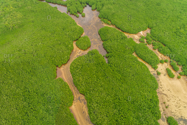 Aerial view of mangroves in Panglao, Philippines.