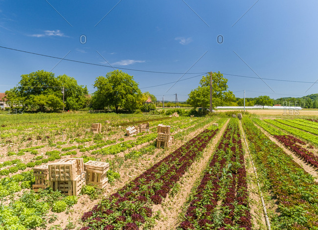 Aerial view of wooden crates on lettuce fields in Correze, France.