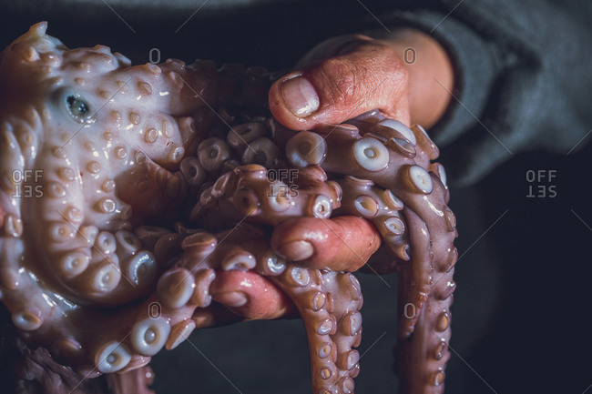 Man holds a raw octopus in his hands. Dark photo.