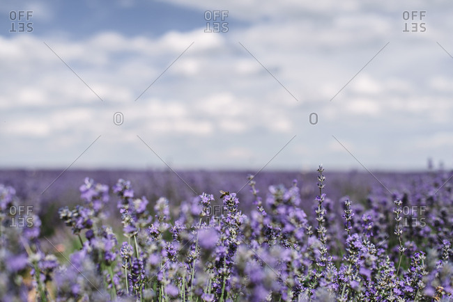 Bush with violet flowers in field