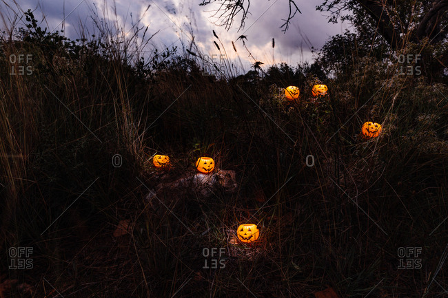Halloween pumpkins in the  forest