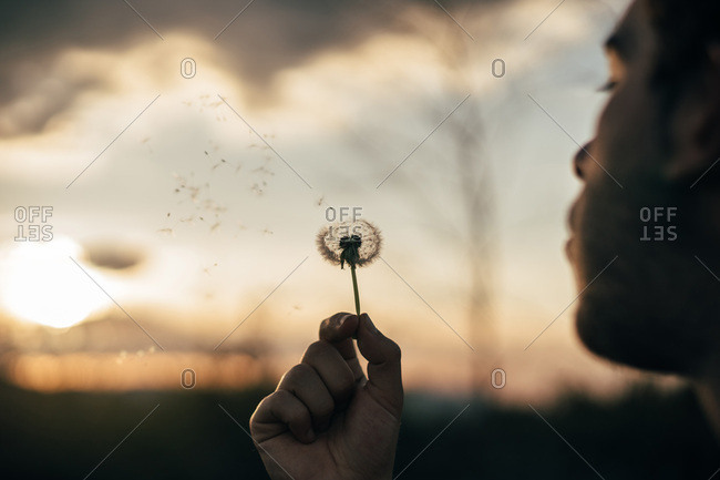 Crop guy blowing off seeds of dandelion while standing on blurred background of countryside during sunset