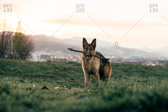 Funny dog standing in field