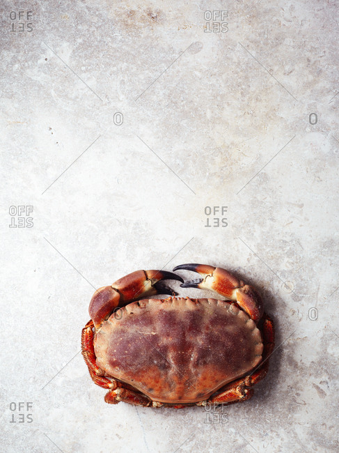 Overhead view of a crab on a kitchen counter