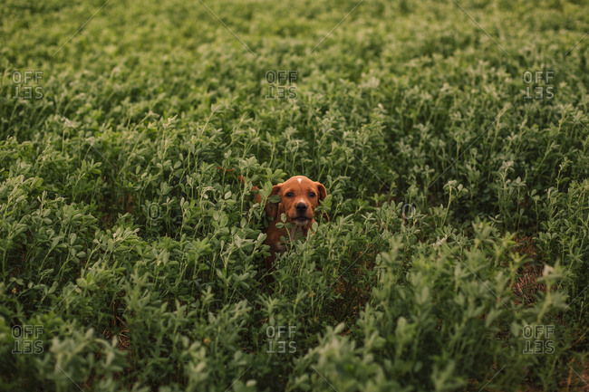 Puppy among grass in the field
