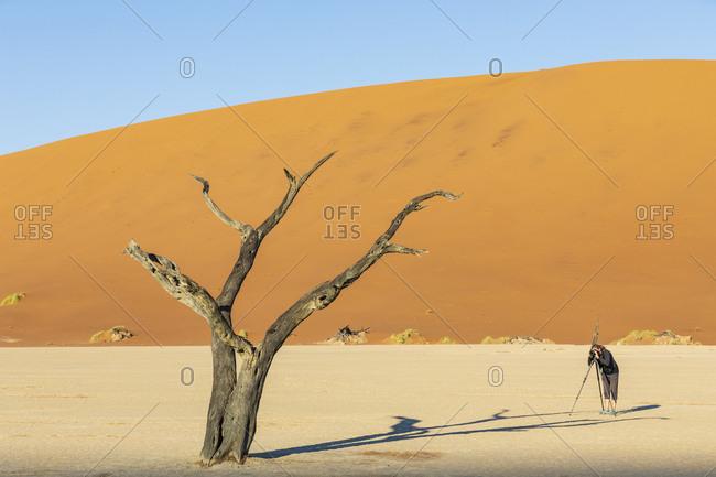 Namibia- Namib Naukluft- Namib Desert- Dead Vlei- tourist photographing dead acacia on clay pan
