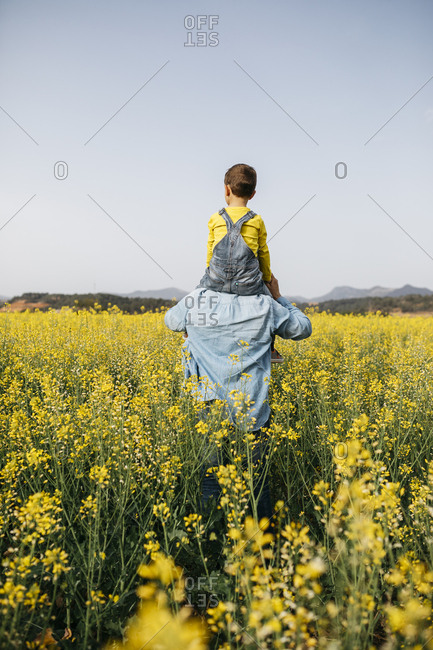Spain- back view of man with his son on his shoulders walking through a field of yellow flowers